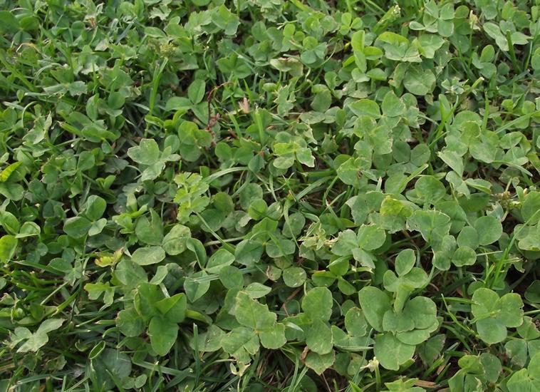 4 - Algo verde